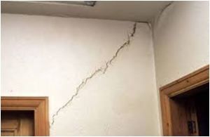 Why Do Tree Roots Cause Subsidence?